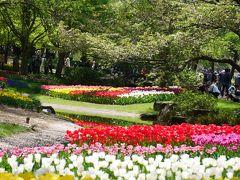 """東京立川・約230種23万球のチューリップが咲き競う""""昭和記念公園""""を訪れて"""