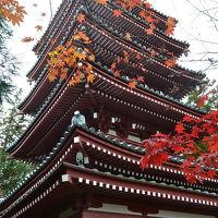 松戸の本土寺へ。。
