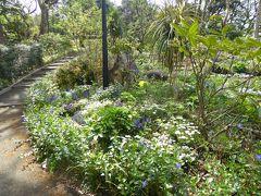 春爛漫の優雅な横浜♪ Vol18 ☆港の見える丘公園:美しい森の中を歩く♪