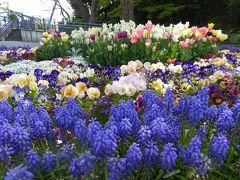 春爛漫の優雅な横浜♪ Vol19 ☆港の見える丘公園から山下公園へ歩く♪