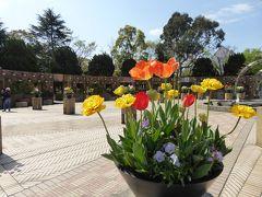 春爛漫の優雅な横浜♪ Vol20 ☆山下公園 チューリップや春の花のスペイン広場♪