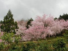 2017年日本縦断めし旅(12)徳島最後の村で絶品日本料理