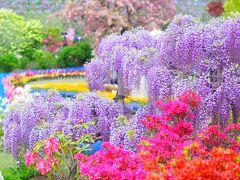 栃木の花もレベル高い!あしかがフラワーパーク