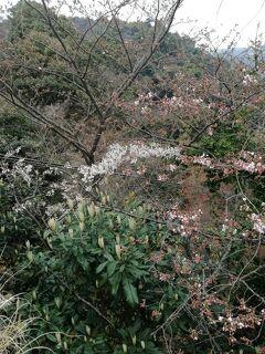 熱海4世代旅行vol.2 2017早過ぎた(>_<)桜