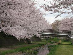 2017年4月7日:桜満開の野川西之橋から武蔵野公園まで散策