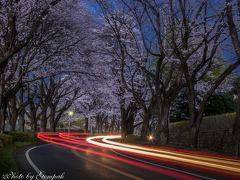 いつもの散歩道写真日記2017年4月 ~八幡山と田川沿いの桜&ちょっと遠出して謙信平の桜~