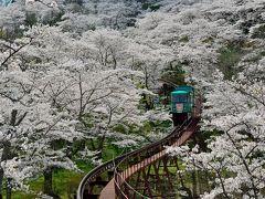 【さくら名所100選】平和観音が見守る桜の園 <船岡城址公園花だより>