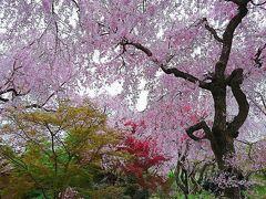 京都-奈良、名残の桜と美術館巡り
