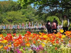 森の花園はためく鯉のぼり 【 ガーデンネックレス横浜/里山ガーデン 2017.4.23  5.24 追記 】
