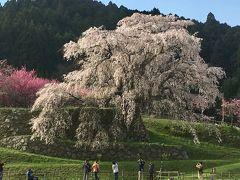 満開の又兵衛桜を見てきました&奈良のお寺、三多気の桜