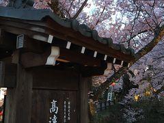満開の高遠桜を見にゆく