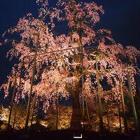 青春18きっぷの旅 2017年春 桜を求めて京都へ 〈7〉 ~東寺ライトアップ~