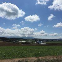 素晴らしい景観と花畑に癒された富良野・美瑛巡り(その1)