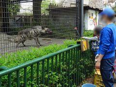 羽村市動物公園での体験三昧~ハイエナやキリンへの餌やり~