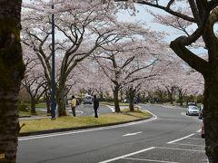 富士桜自然墓地公園 2017.04.22