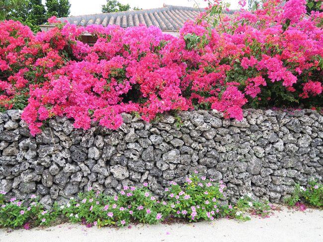 (写真は竹富島、ブーゲンビリア)<br /><br />正月の宮古島(http://4travel.jp/travelogue/11206249)に続き、今回は八重山諸島を廻ります。<br />八重山諸島とは石垣島、西表島、竹富島、小浜島、黒島、少し離れて日本最西端の与那国島、そして最南端の波照間島などから成る群島です。宮古諸島と合わせ先島諸島と呼ばれます。石垣島は石垣市、与那国島は与那国町なのですが、その他の島々はすべて竹富町となり、町の役場は石垣市にあるというからややこしい。さらにその職員は石垣市民だというからますます手におえない。それらの島々は石垣市離島ターミナルから高速船やフェリーで結ばれています。<br /><br /> ・石垣にサンゴ重ねて春と夏<br /><br /> ・風に舞いあなた此方のマダラ蝶<br /><br /> ・南風美らの國から招待状