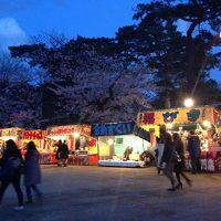 夜桜見学へ 千秋公園