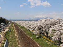 まさに桃源郷・福島花見山公園と圧巻の桜並木・白石川堤一目千本桜の旅