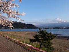 《東京から日帰り》#38 山梨県 富士山と桜を撮影しに行く!