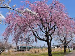 鏡石と岩瀬牧場の桜めぐり 2017(福島)