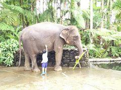 母子+バアバの初めてバリ島のんびり旅⑨エレファントサファリ