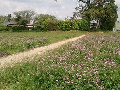 大和橿原レンゲ草の道銀輪行