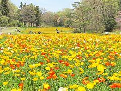 花の埼玉 武蔵丘陵森林公園 比企郡滑川町
