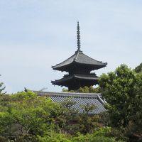仁和寺 今回の京都旅行で一番気に入ったお寺