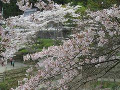 2017春、奈良県の桜巡り(8/10):4月15日(8):花の郷・滝谷(2/4):チューリップ、芝桜、水仙、染井吉野、シャガ、椿