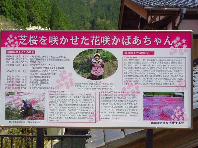 國田家の芝桜・・・豆知識PRESSから引用<br /><br />岐阜県のほぼ中央に位置する郡上市には、「国田家の芝桜」と呼ばれる名所があります。<br /><br />国道472号(通称せせらぎ街道)を、高山市から岐阜市方面に抜けるように走っていると、国道に沿うように流れている吉田川の向こう斜面に突如、芝桜の景色が見えてきます。そこが国田家です。<br /><br />国田家の芝桜は、この家の住人であった国田かなゑさんが、1961年に実家から持ち帰った1株の芝桜を自宅裏の桑畑に植えたことが始まりでした。花が好きだったかなゑさんは、丁寧に草取りや水やりの世話をし続け、徐々に株分けをしながら今のように広げていったようです。<br /><br />かなゑさんは花咲ばあちゃんと呼ばれ多くの方から慕われていましたが、2002年にお亡くなりになっています。そして現在は、娘の洋子さんを中心に「国田家の芝桜を愛する会」が結成され、地元の方がボランティアで維持していらっしゃいます。<br /><br />平成4年農林大臣賞を、平成8年内閣総理大臣賞を受賞しており、テレビなどでも取り上げられて年々観光客が増えているようです。