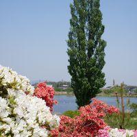 """群馬館林・世界に誇る日本一のツツジの名園""""つつじが岡公園""""を訪れて"""