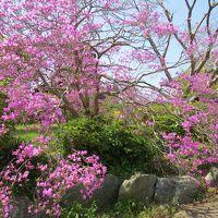 養老渓谷散策・・養老川滝めぐり遊歩道と出世観音・弘文洞跡を訪ねます。
