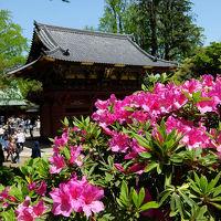 根津神社 つつじ祭りも数日で終わりに,頑張ってるつつじもありますよ、