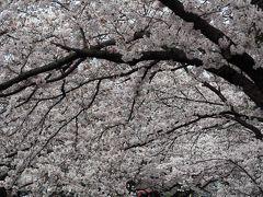 2017 麻生川の桜