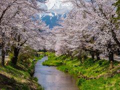 2017年山中湖ロッジ滞在記(1) 忍野村新名庄川の桜並木