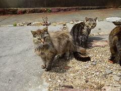初めての愛知県佐久島、猫の島