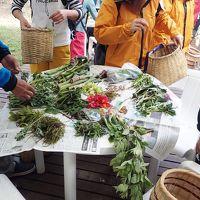 野尻湖で山菜採り