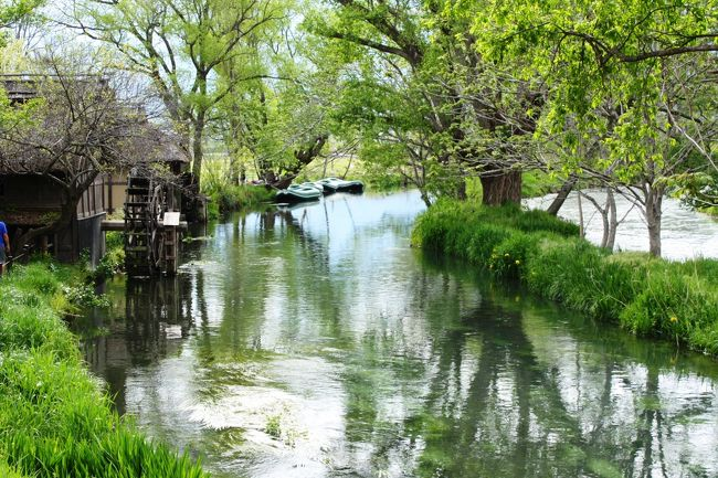 松本城を後にして、向かうは安曇野。<br />キレイな水のわさび田を見て、ココロもスッキリさせたいっ!