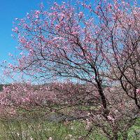 日帰り温泉と大河原一目千本桜