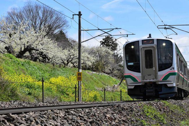 福島県の北端に位置する国見町貝田(くにみまち かいだ)は、宮城県境に近いところです。<br /><br />福島駅から仙台方面の電車に乗ると、桃畑が広がる福島盆地を通り抜けます。4月下旬の時期、一面がピンク色に染まる桃源郷になります。<br /><br />4つ目の藤田駅を過ぎると、鉄道は厚樫山(あつかしやま)の周りの急勾配を登り始め、福島盆地の絶景を一望しながら貝田駅に到着します。<br />奥州街道の宿場町だった貝田宿はすでにその面影が残っていませんが、地元特産の国見石を使った蔵が民家の中にあります。<br />山の斜面には菜の花や桃・スモモの花が咲き誇り、貝田周辺で鉄道と桃源郷の写真を撮ることにします。<br />
