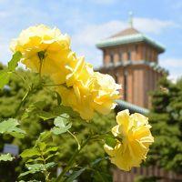 ガーデンネックレス横浜2017:後半はバラの花が主役です