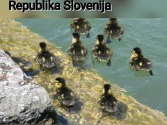 鳥の囀りで目覚める旅(1)・スロヴェニア編 2017年 GW