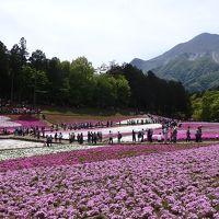 羊山公園の芝桜と寶登山神社