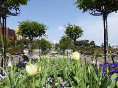 春爛漫の優雅な横浜♪ Vol22 ☆山下公園 立体感のあるバラ庭園♪