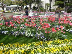 春爛漫の優雅な横浜♪ Vol26 ☆山下公園から開港広場へ 咲き誇るチューリップや春の花♪
