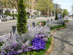 春爛漫の優雅な横浜♪ Vol28 ☆日本大通り♪ 大通りを彩る春の競演♪