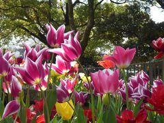 春爛漫の優雅な横浜♪ Vol32 ☆横浜公園♪ 怒涛のカラフル・チューリップ庭園♪