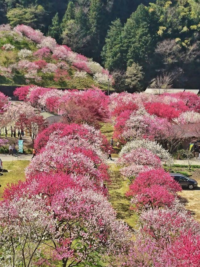 昼神温泉郷の公式サイトで月川温泉郷付近の花桃が見頃を迎えたということを知り、ちょうどGWだったので長野県の阿智村を訪問しました。<br />東京から中央道を使って、四時間弱。意外と近く感じました。<br /><br />満開の花桃は圧巻でした。<br />夜は日本一と言われる満天の星空☆<br />最高の阿智村ステイを楽しみました。<br />帰りは、阿智から駒ヶ根まで下道で。<br />アルプスとりんごの花がとても綺麗でした。