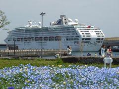 春爛漫の優雅な横浜♪ Vol38 ☆象の鼻のパーク♪ 潮風にそよぐ春の青い花♪