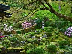新緑の春景色(今は石楠花 )・京都大原三千院